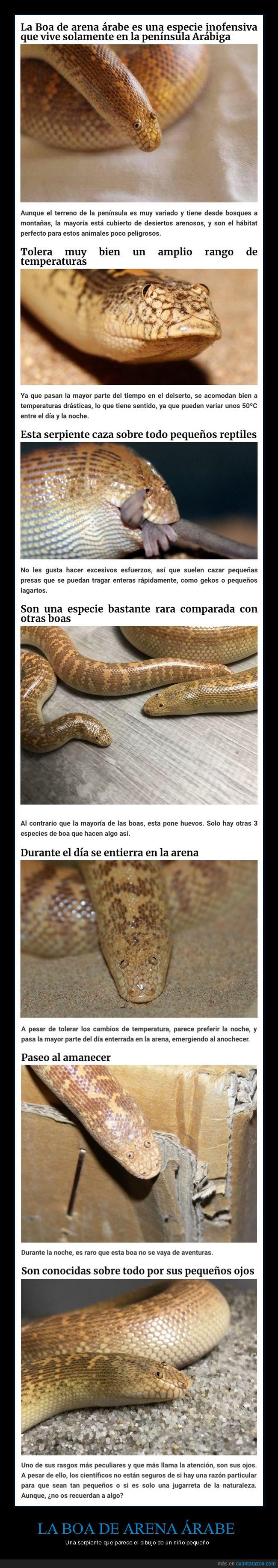boa de arena árabe,ojos,serpiente