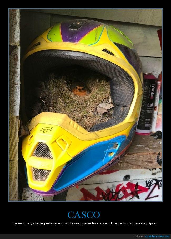 casco,nido,pájaro