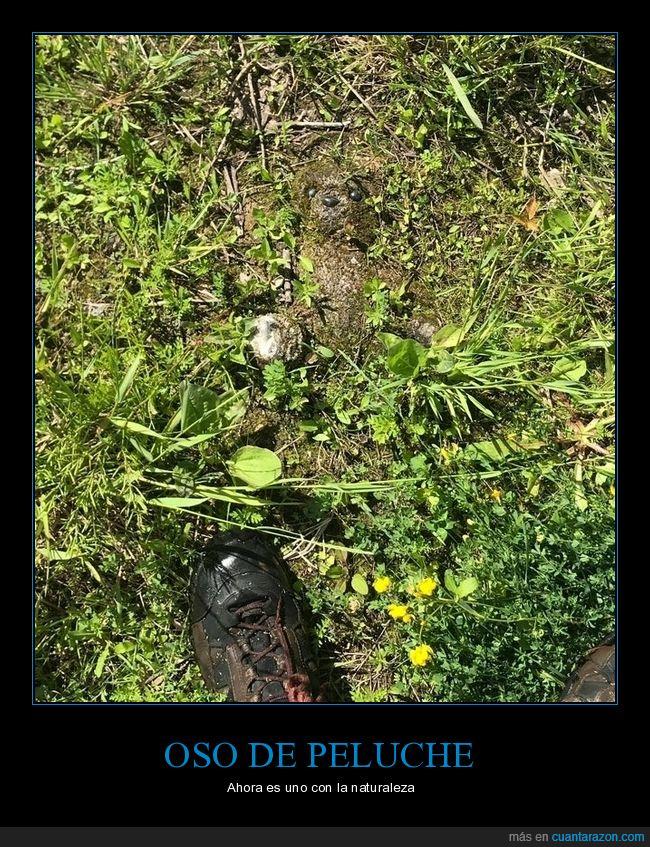 oso de peluche,vegetación
