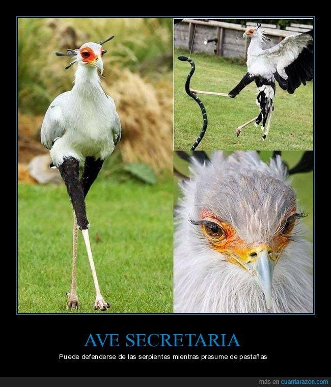 ave secretaria,pestañas,serpiente