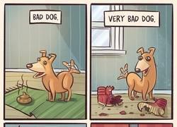 Enlace a El perro más malo