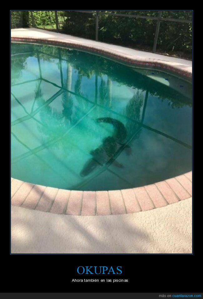cocodrilo,piscina,wtf