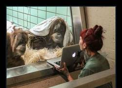 Enlace a Tinder llega al reino animal