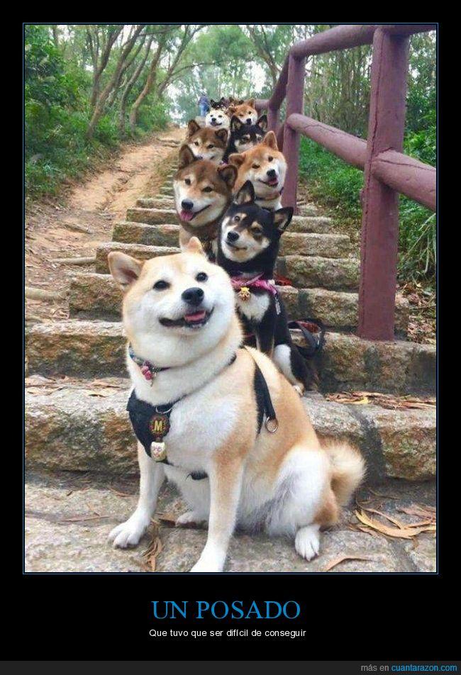 escaleras,foto,perros,posando