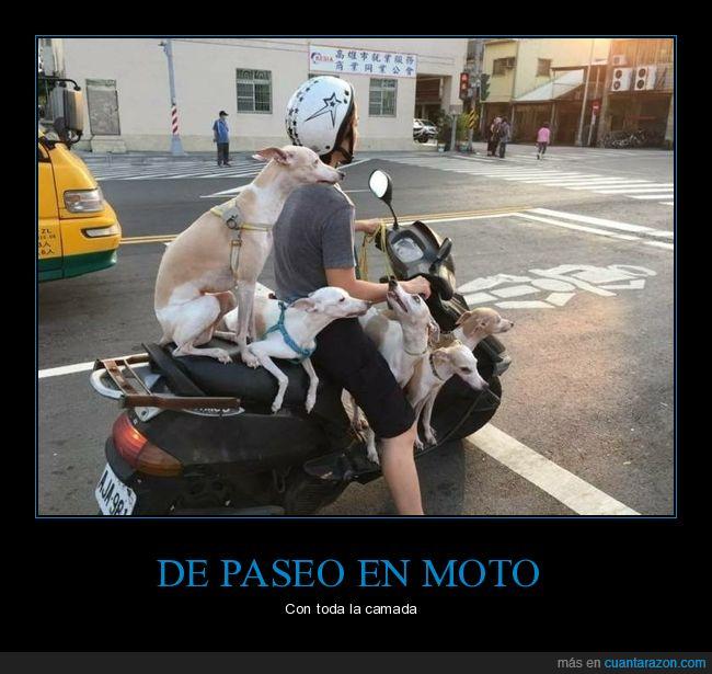 moto,perros,wtf