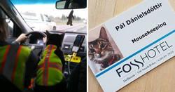 Enlace a La gente comparte fotos de gatos trabajando