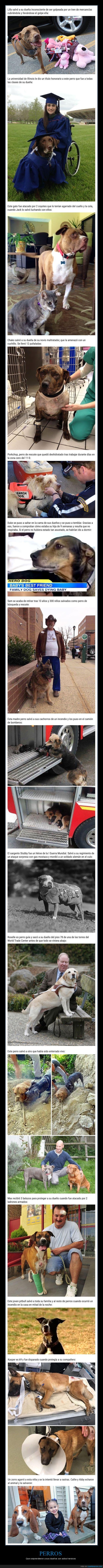 actos heroicos,héroes,perros
