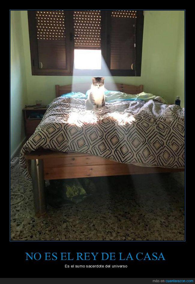 gatos,luz,ventana
