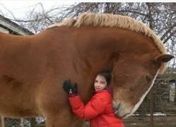 Enlace a Enorme caballo