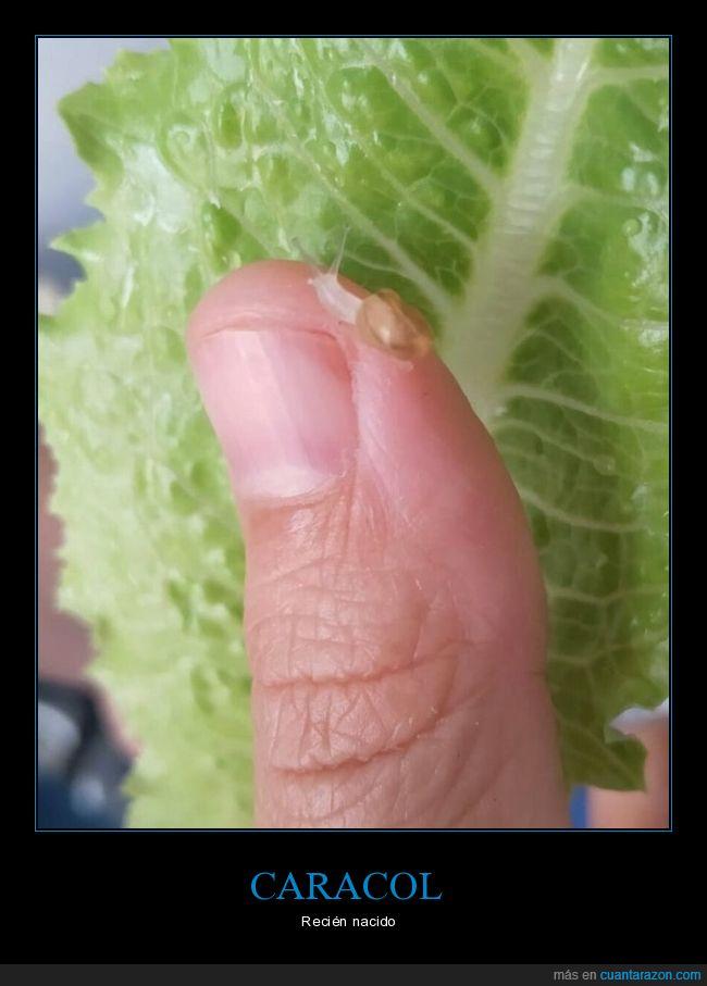 caracol,pequeño,recién nacido