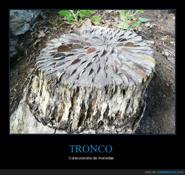 monedas,tronco