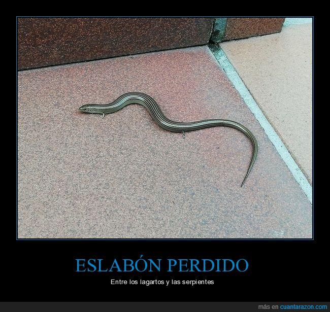 eslabón,lagarto,serpiente