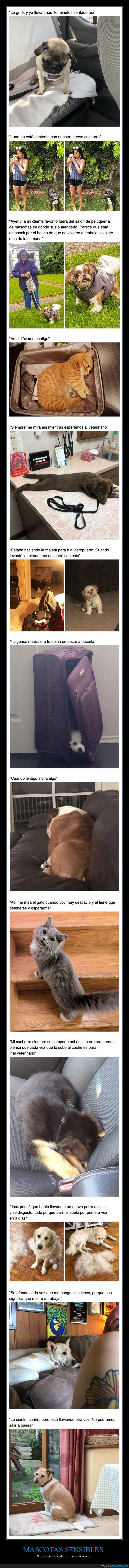 mascotas,sensibles,sentimientos