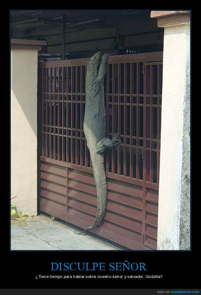 gigante,lagarto,puerta,varano,wtf