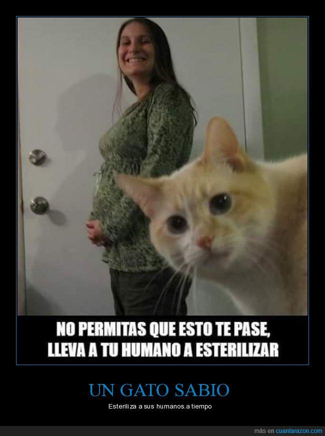 embarazada,esterilizar,gatos,humanos