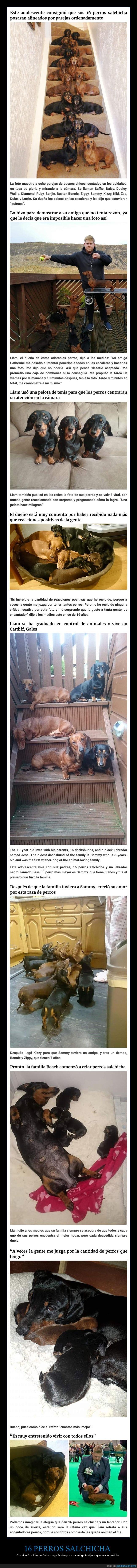 foto,perros,perros salchicha