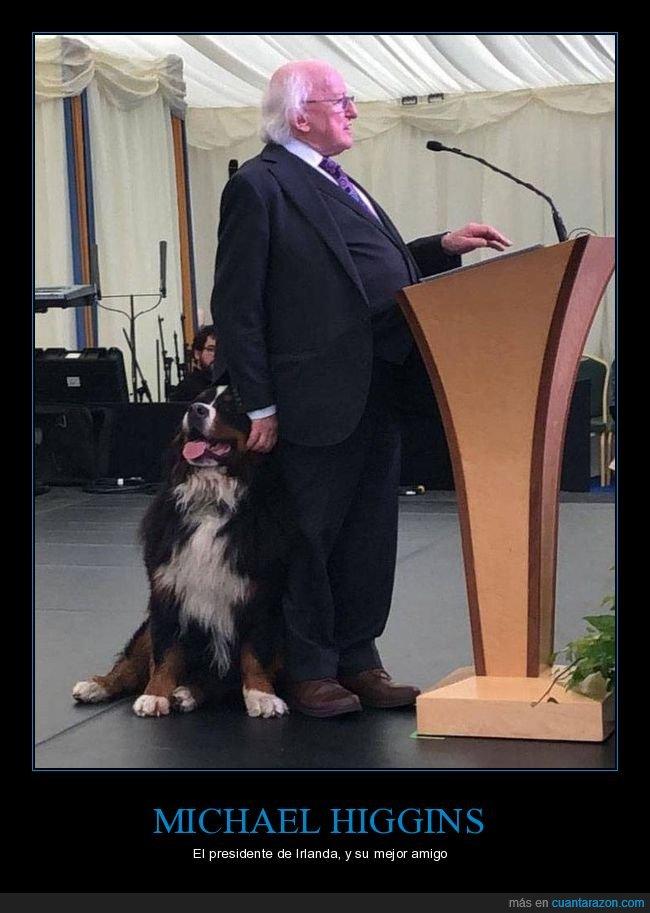 irlanda,michael higgins,perros,políticos,presidente
