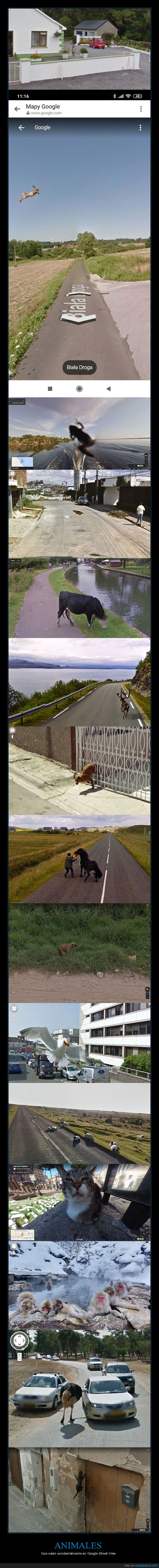 animales,street view,wtf