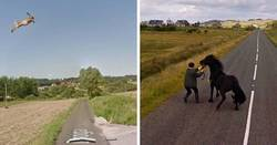 Enlace a Fotos accidentales de animales que salen en Google Street View