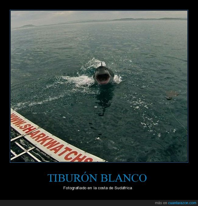 foto,sudáfrica,tiburón
