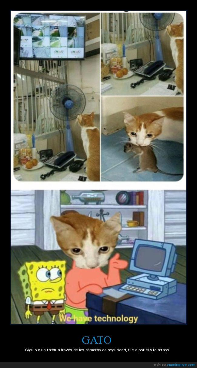 atrapar,cámaras de seguridad,gato,ratón,wtf