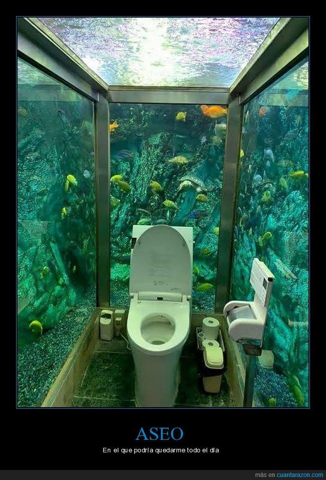 acuario,aseo,wtf