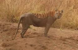 Enlace a Tigre cargando texturas
