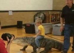 Enlace a Si nunca cabalgaste a lomos de un cocodrilo, no tuviste infancia.