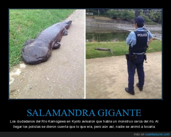 monstruo,policía,salamandra gigante,wtf