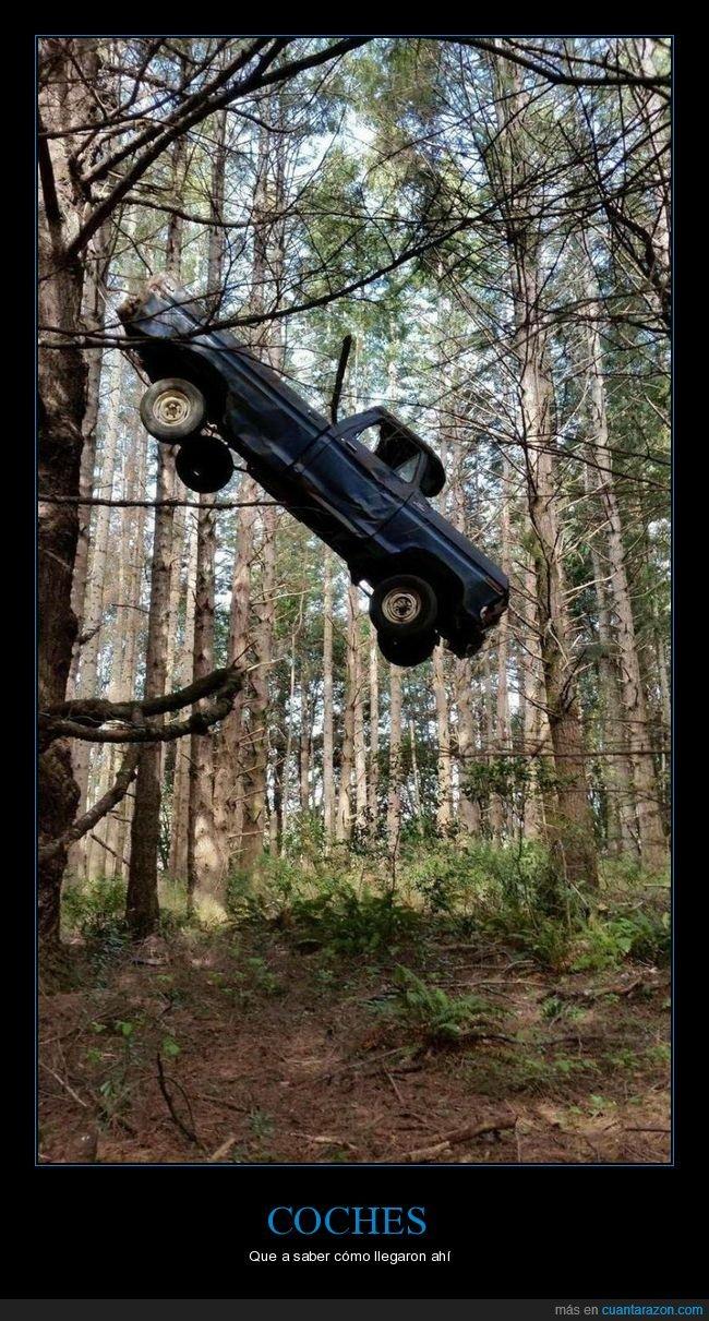 árbol,bosque,coche,wtf