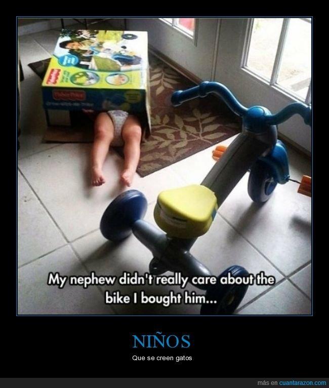 caja,niño,triciclo,wtf