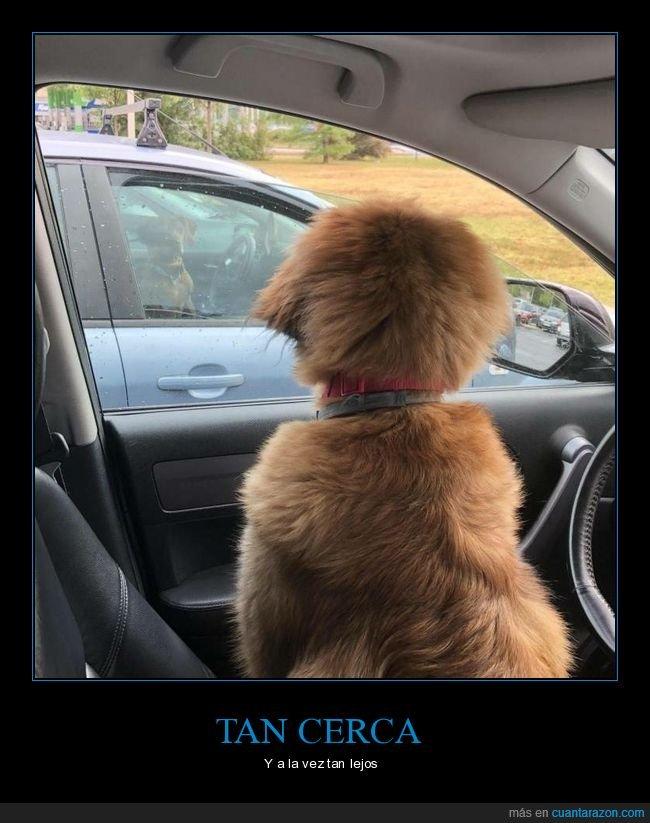 coches,mirando,perros