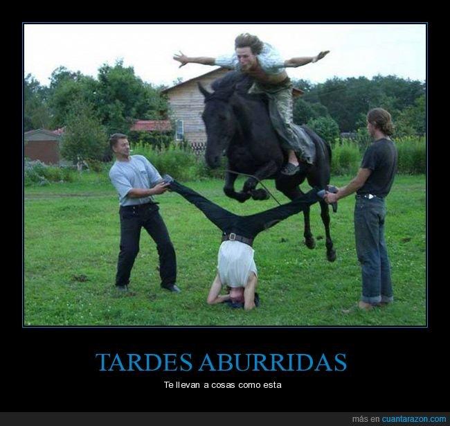 caballo,salto,wtf