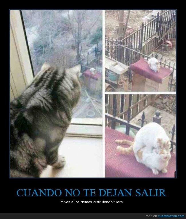 gato,mirando,ventana