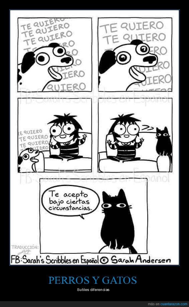 gato,perro,querer