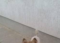 Enlace a El perro de Richard Gere