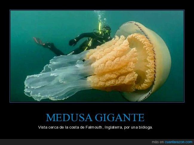 gigante,medusa,wtf