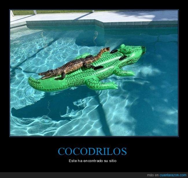 cocodrilo,colchoneta,wtf