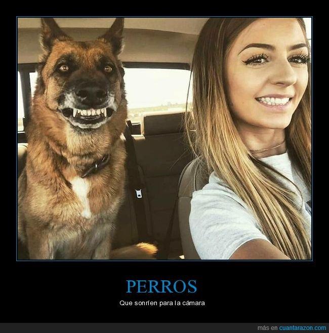 foto,perros,sonrisa