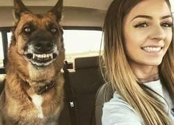 Enlace a Sonrisa canina