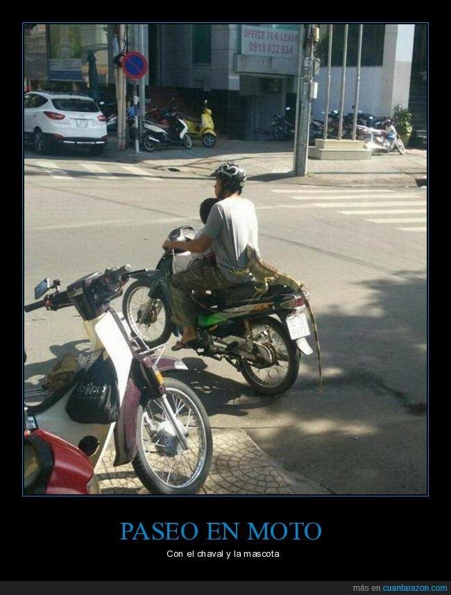 iguana,moto,wtf
