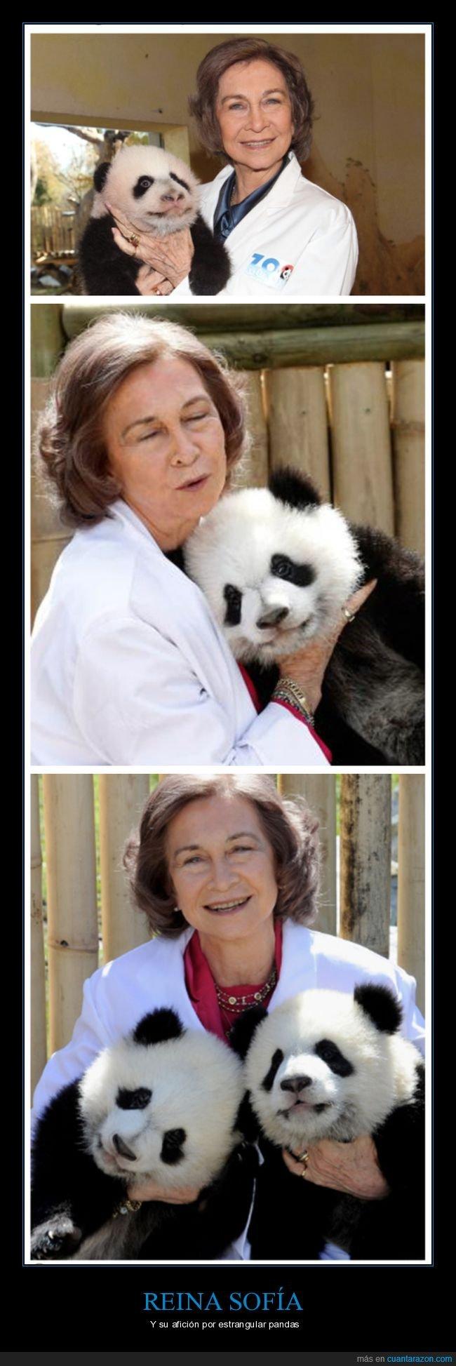 estrangulando,panda,reina,sofía