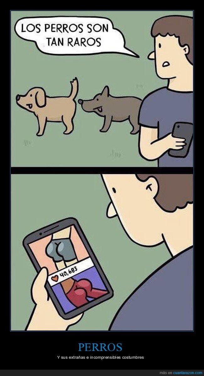 culos,oliendo,perros,raros
