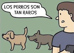 Enlace a Cosas de perros