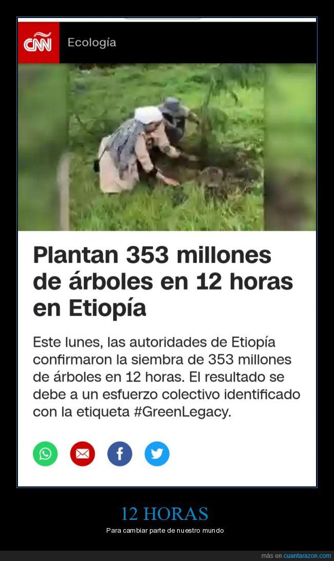 árboles,etiopía,plantar