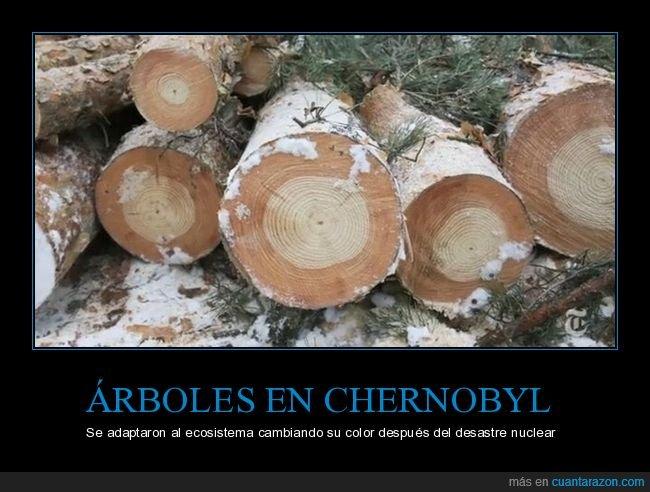 adaptación,árboles,chernobyl,color