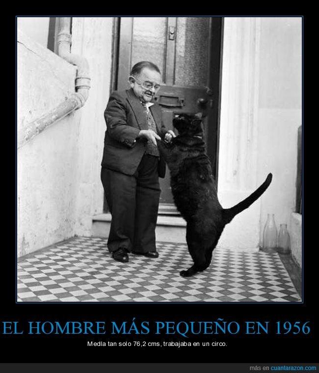 1956,gato,hombre,pequeño