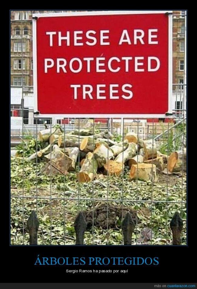 arboles,troncos