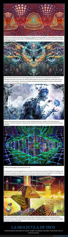 arte,Piscodelico,plantas sagradas,psychedelic,visionario