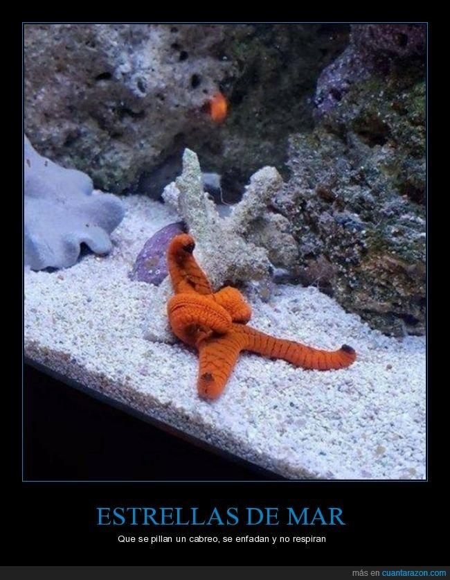 brazos cruzados,cabreada,estrella de mar